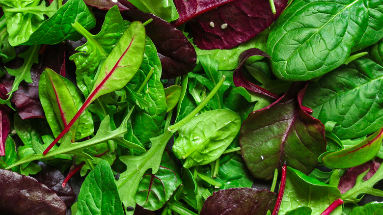 A healthy salad mix including arugula and spinach