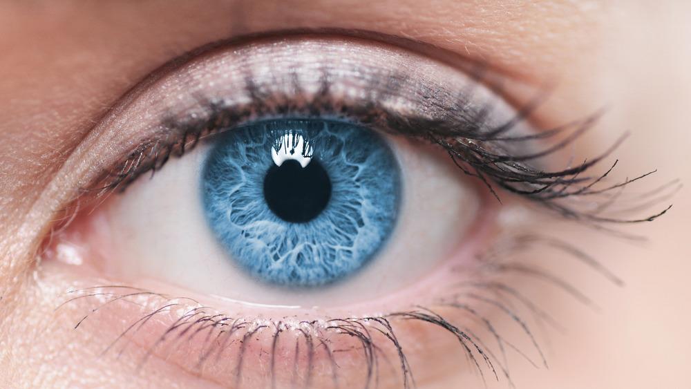 Closeup of An Eye To Show Third Eyelid