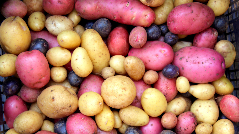 A variety of purple, white, and red potatoes
