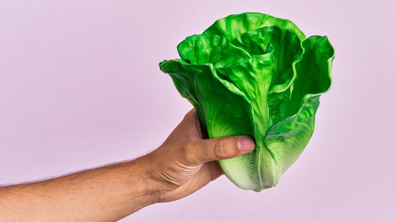 Hand holding leaves of lettuce
