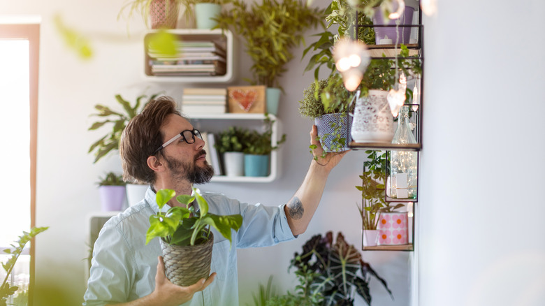 Man taking care of potted plants at home