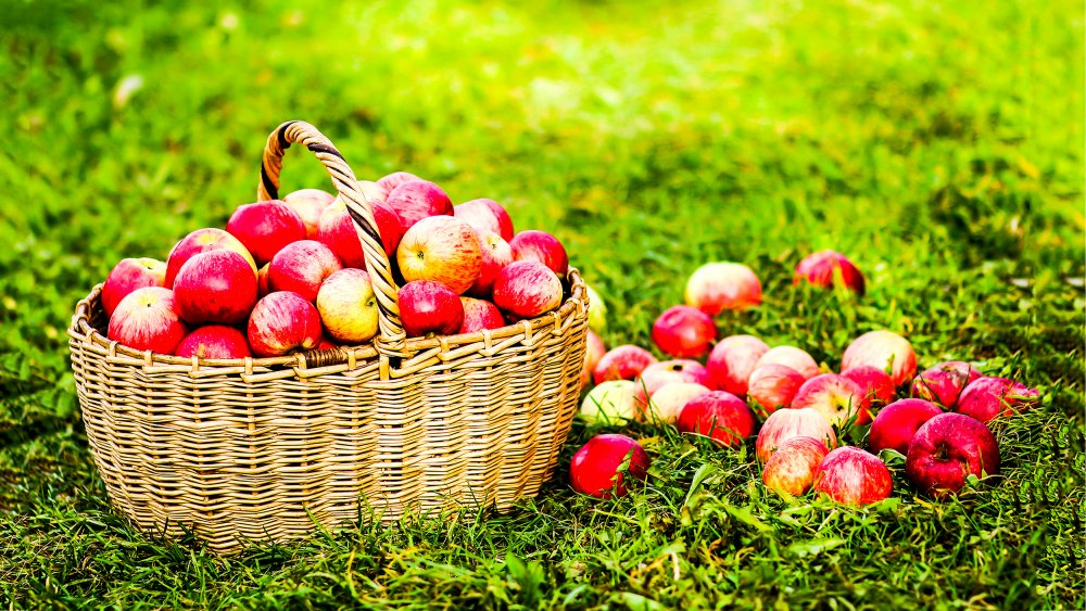 Basket with red apples on grass