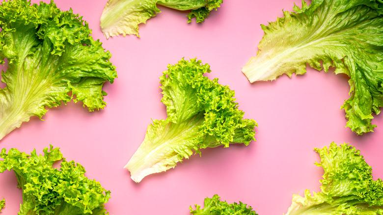 Leaves of lettuce on pink background