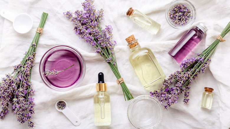 An assortment of lavender oils and plants