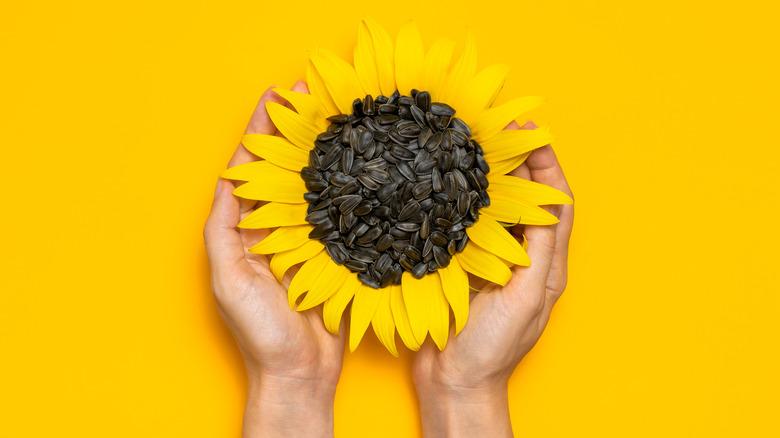 hands holding a sunflower and sunflower seeds