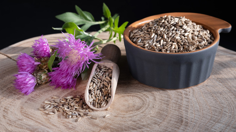 Milk thistle plant with seeds