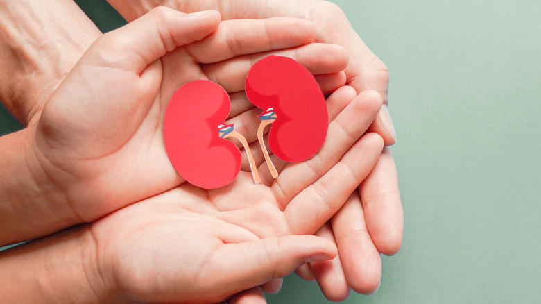 Hands holding kidney picture