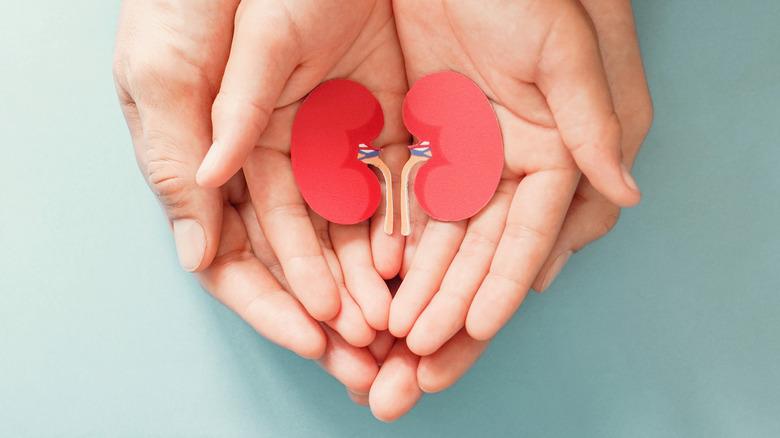 Hands holding image of kidneys