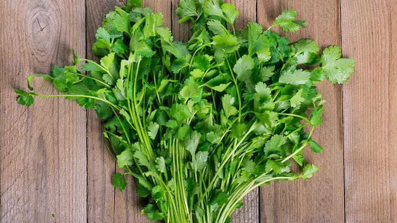 Fresh raw bunch of cilantro on wood