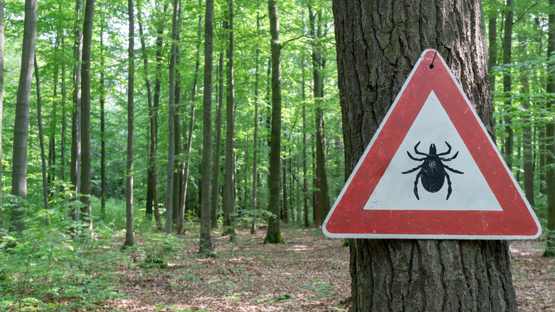 warning sign of ticks in a wooded area