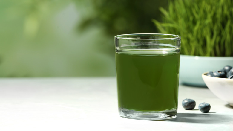 wheatgrass drink