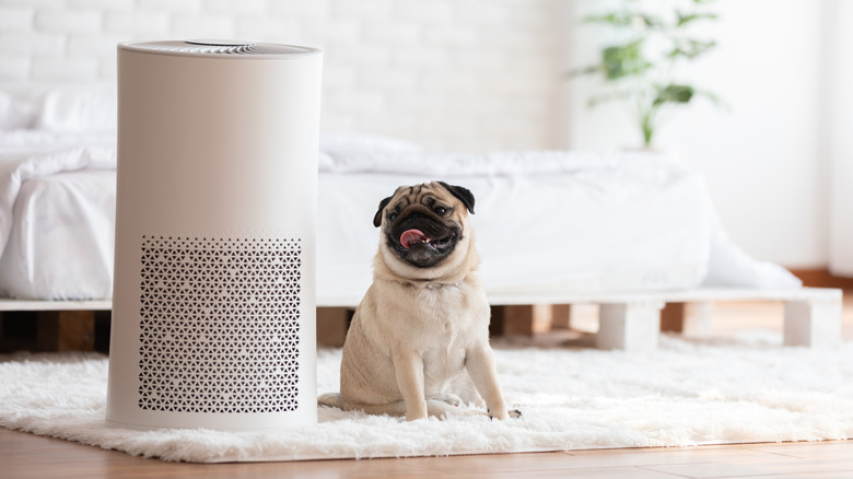 Dog sitting next to air purifier