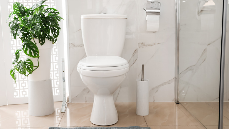 toilet, toilet paper and plant